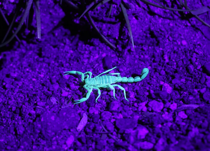 Scorpio New Moon 2018 Sandy Sitron The Numinous purple turquoise scorpion