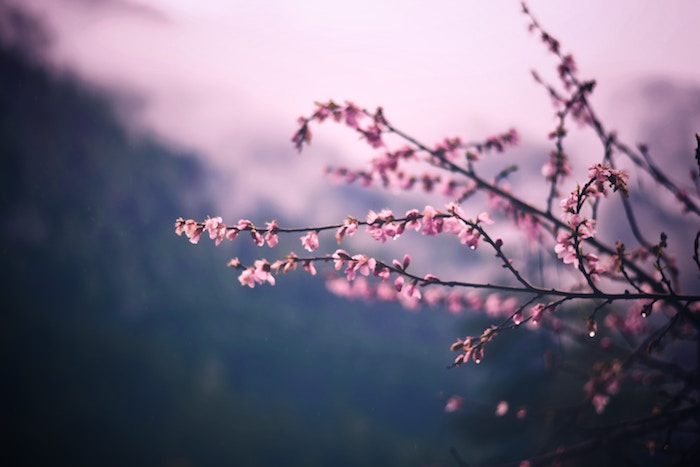 Pink blossom Numinous horoscopes The Numinous Sandy Sitron April 1 2019
