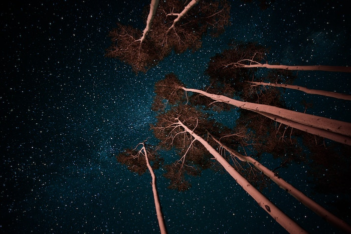 Numinous weekly horoscopes May 13 2019 Sandy Sitron night trees