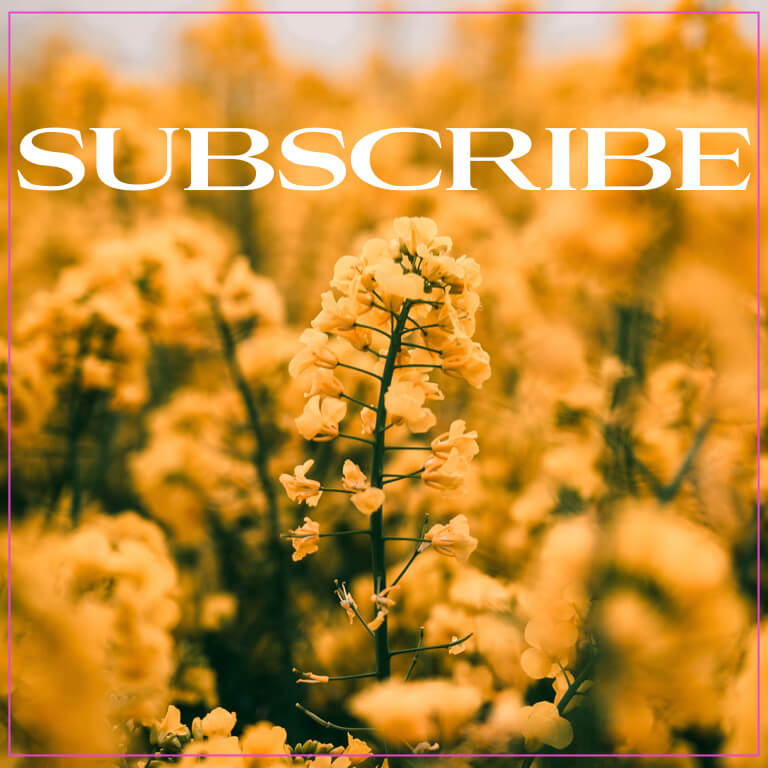 subscribe the numinous yellow flowers